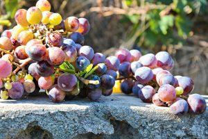 Pavel Binder vinařství